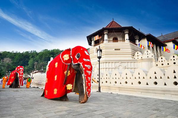 elephant+temple.jpg