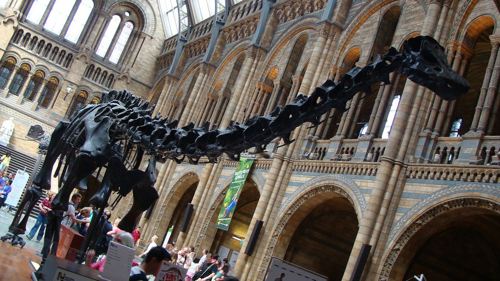 Walk with the dinosaurs with this virtual tour of the natural history museum