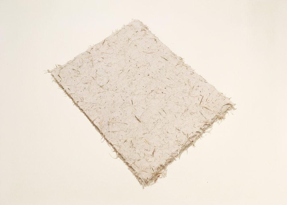 "Dracena Marginata Paper, 12x9"", 0 of 6 available"