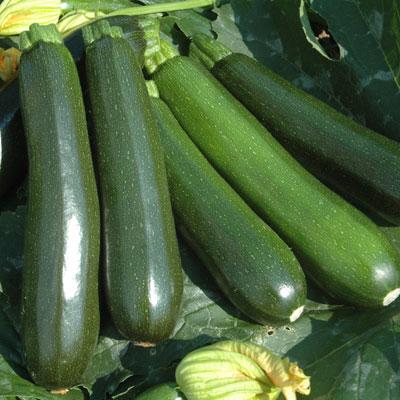 zucchini squash.jpg
