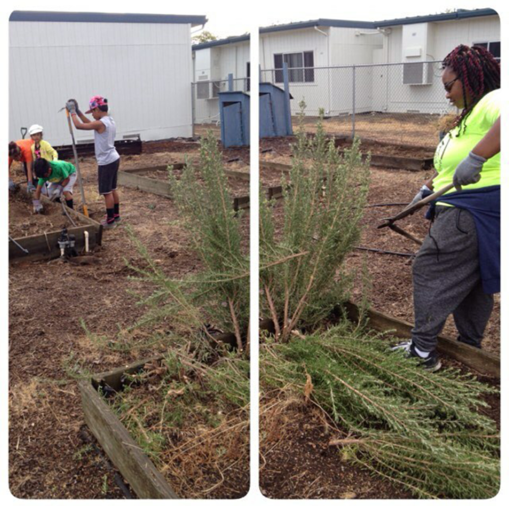 Helping to get Garden up and running again at a school in Lincoln, CA.