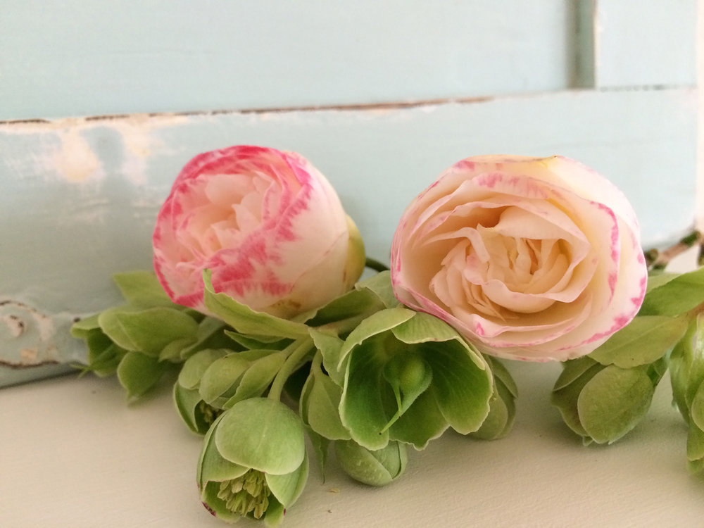 Camellia 2.JPG