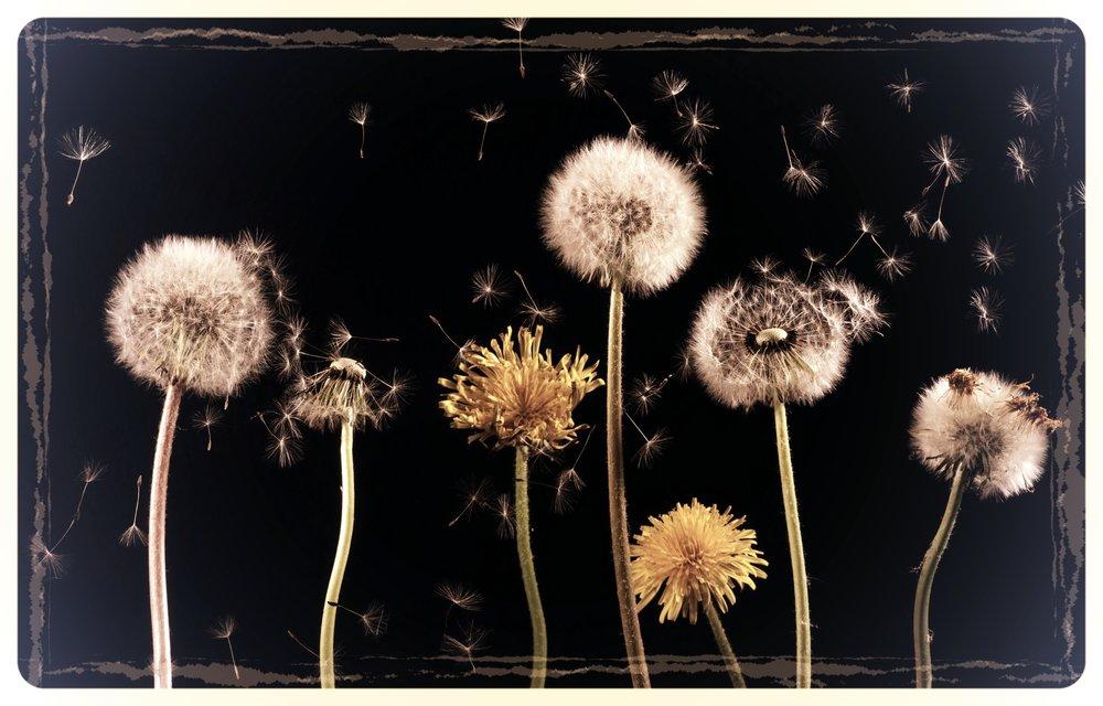 dandelion-macro-common-dandelion-taraxacum.jpg
