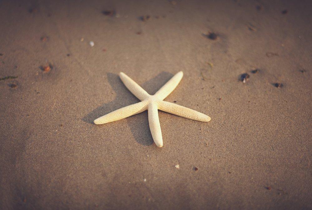 starfishie.jpg