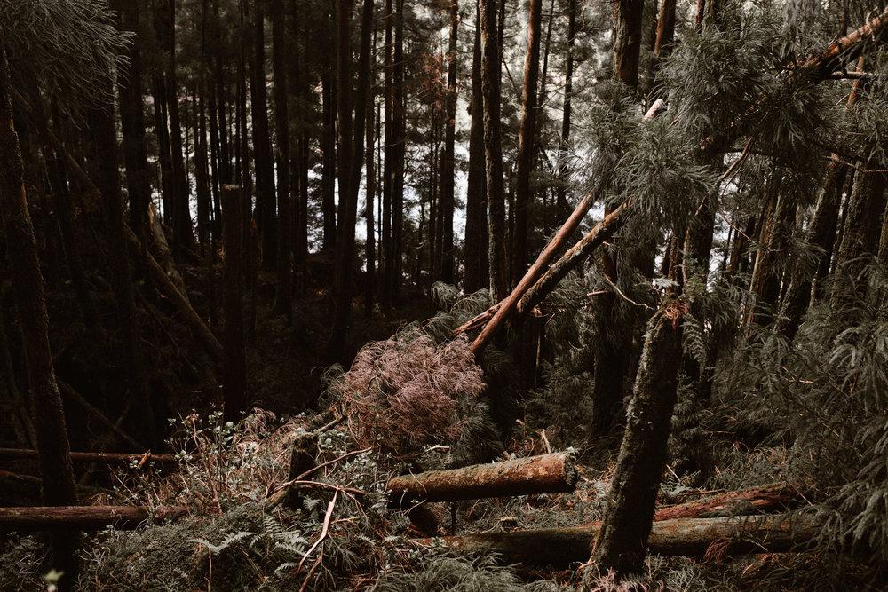 Azores 65.jpg