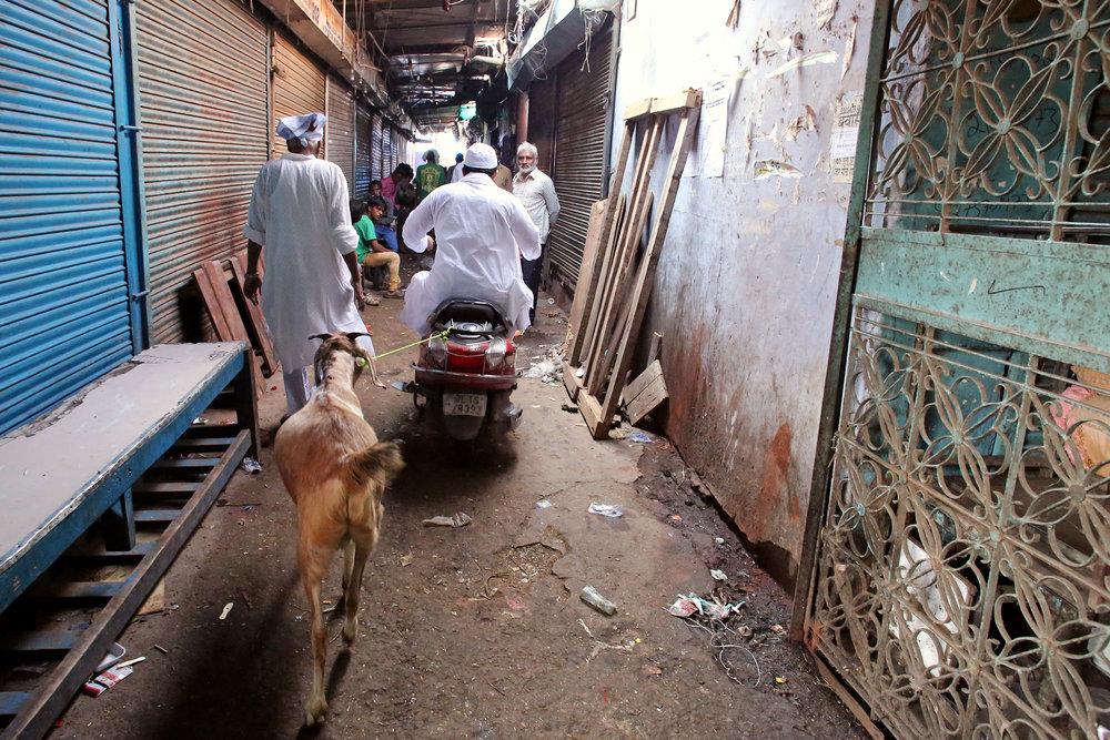 goat scoot.jpg