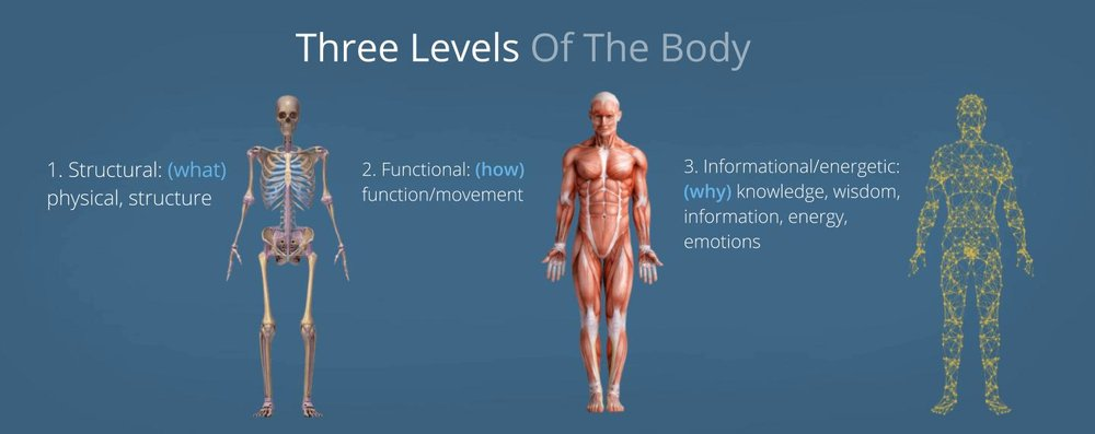 Integrative Anatomy Trunamics