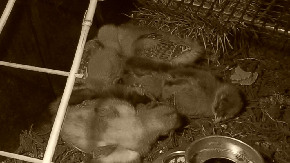 Precious! All six cuddling at night.