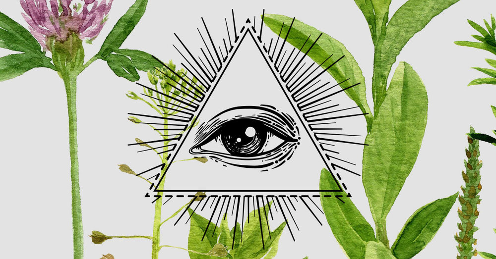 Everything You Need To Know The Pineal Gland Solful Health