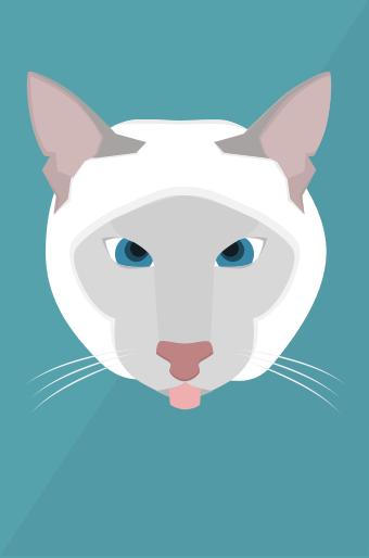 The cross-eyed cat