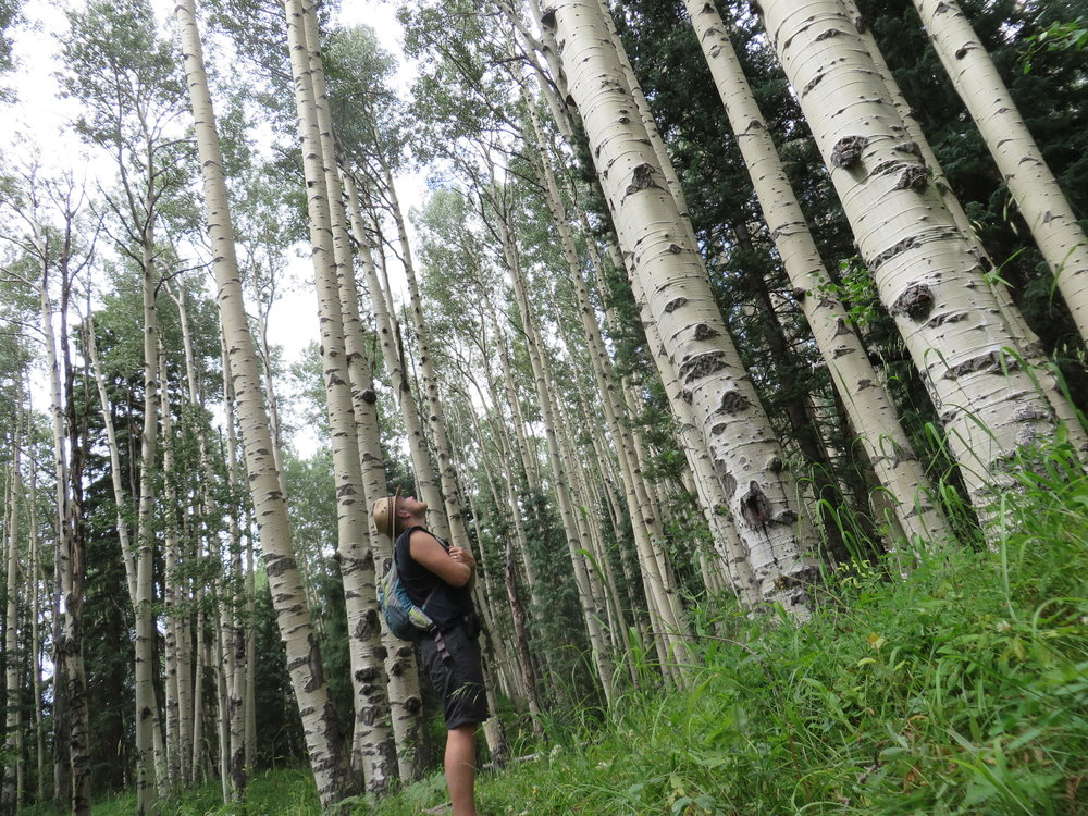 This is my partner looking up in awe at a grove of aspens in Colorado. Such majesty in the sights and sounds of nature inspires us!
