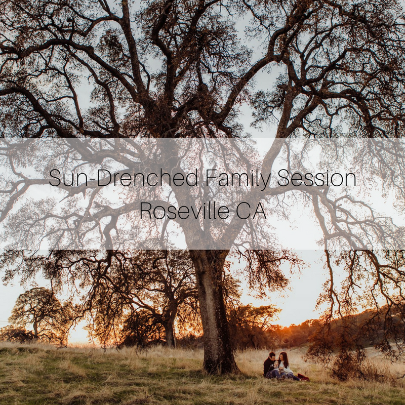Family session under tree, sun, family, Becci Ravera Photography, Sacramento ca