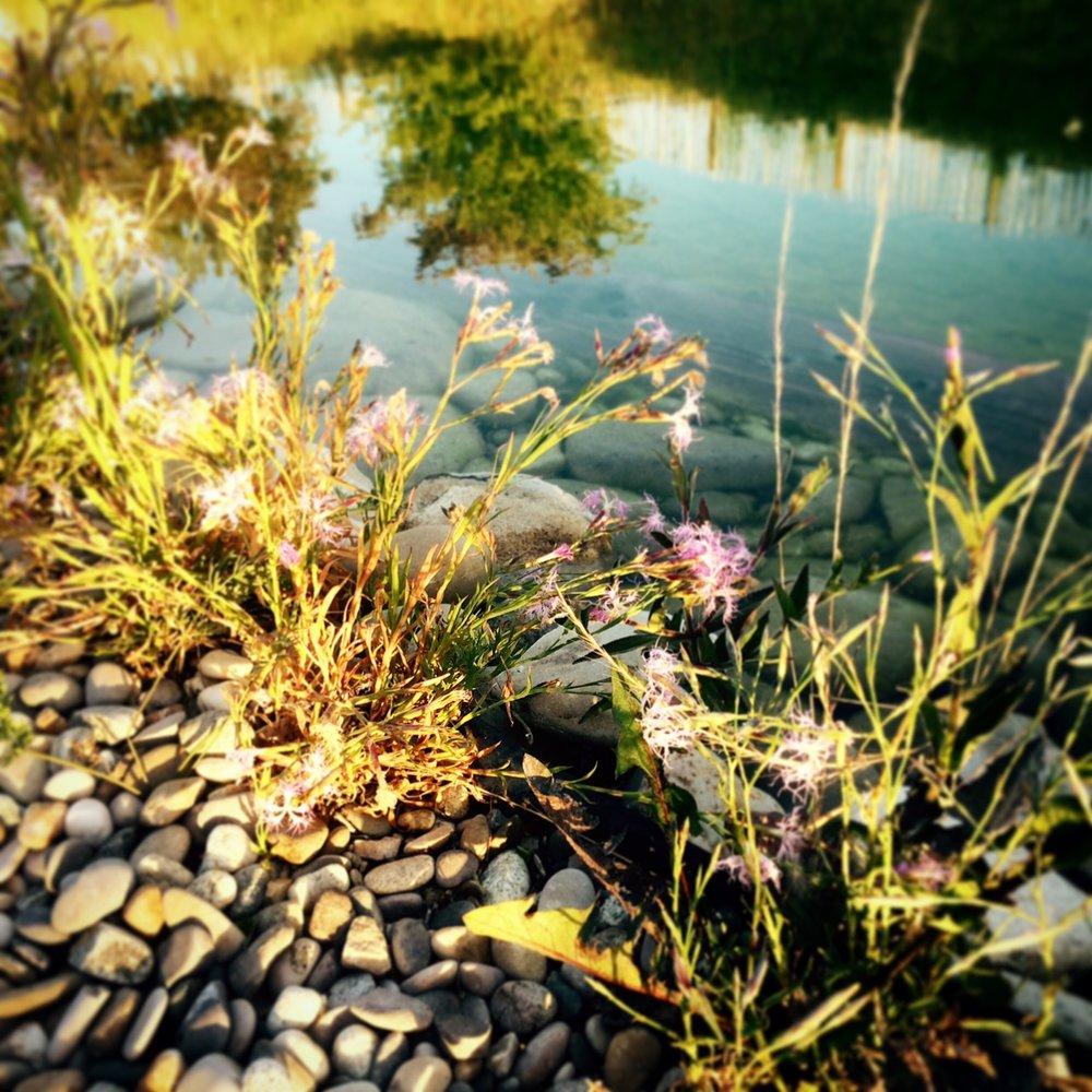 piscine fleurs (2).JPG