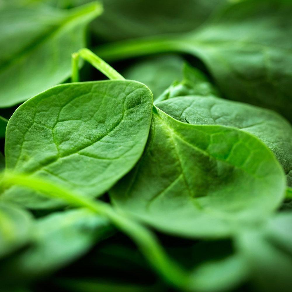 photodune-7256362-spinach-m.jpg