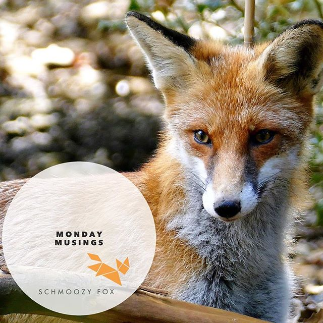 Is it the cold winter rain or is it the eclipse? 😯Today has been a day of reflection 📿 rather than action, what about you? #monday#mondaymuse #mondaymusings #newweek #branding #reflection #fox #thoughtful #eclipse #schmoozyfox #marketing #marketingstrategy #brandstrategy #howtobrand #marketingmetaphors #marketingsymbols #symbols #metaphors