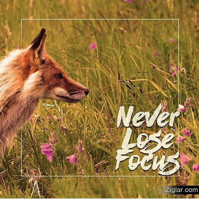 Where the focus goes, the energy flows 🦊Repost from @thezigziglar #focus #concentration #branding #startups #brandstrategy #entrepreneur #entrepreneurlife #entrepreneurship #brandnaming #brandingtips #marketingstrategy #schmoozyfox #brandconsulting #brandmanagement #sales #salesstrategy