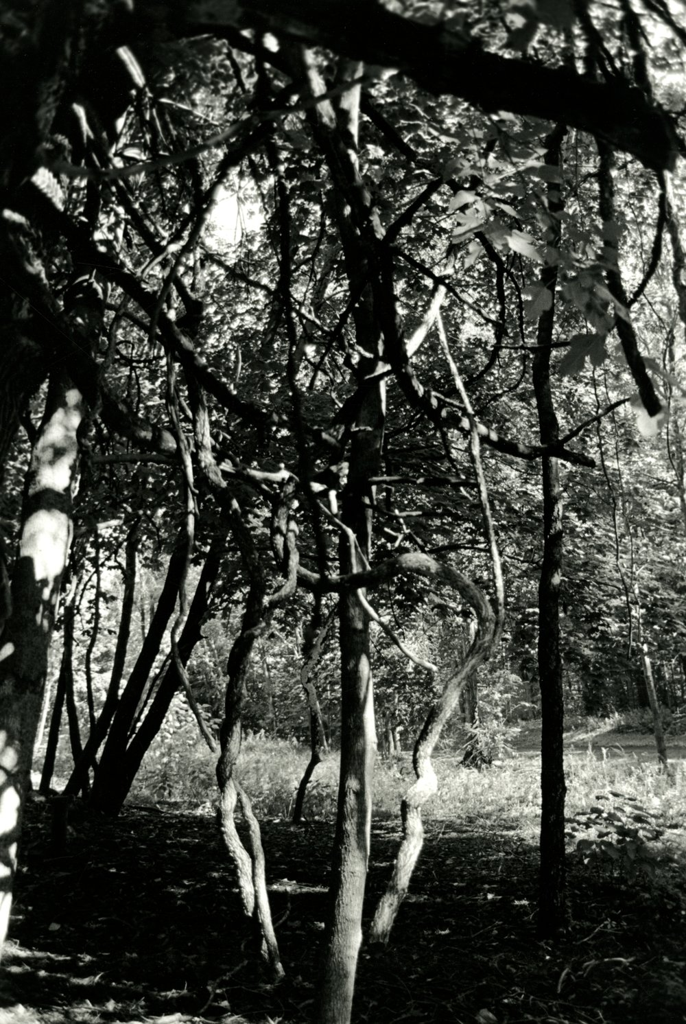 35mm black and white photograph, 2013