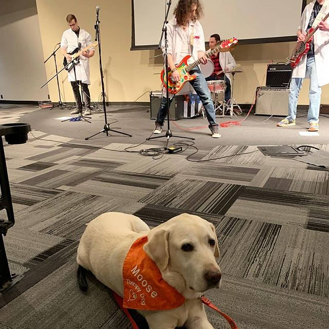 Still got it with The Anal Glands VMCVM rock band @vttherapydogmoose @vamdvetmed  Check out mitchellkenyon.com for more!  #dmv #newmusic #dmvmusicians #altrock #guitar #drums #bass #dcmusic #washingtondc #dmvmusic #dmvmusicindustry #unsignedartist #indieartist #Rockmusician #rockmusicians #rockmusician #Americanrockmusician #hardrockmusician #nirvana #rhcp #greenday #blink182 #thebeatles #sum41 #cat #cutecats #LinkinPark #foofighters #johnlennon