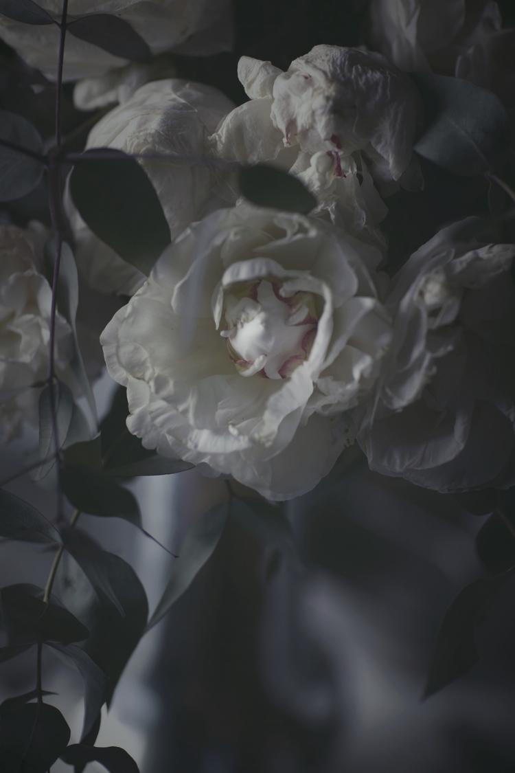 Wilting roses.jpg