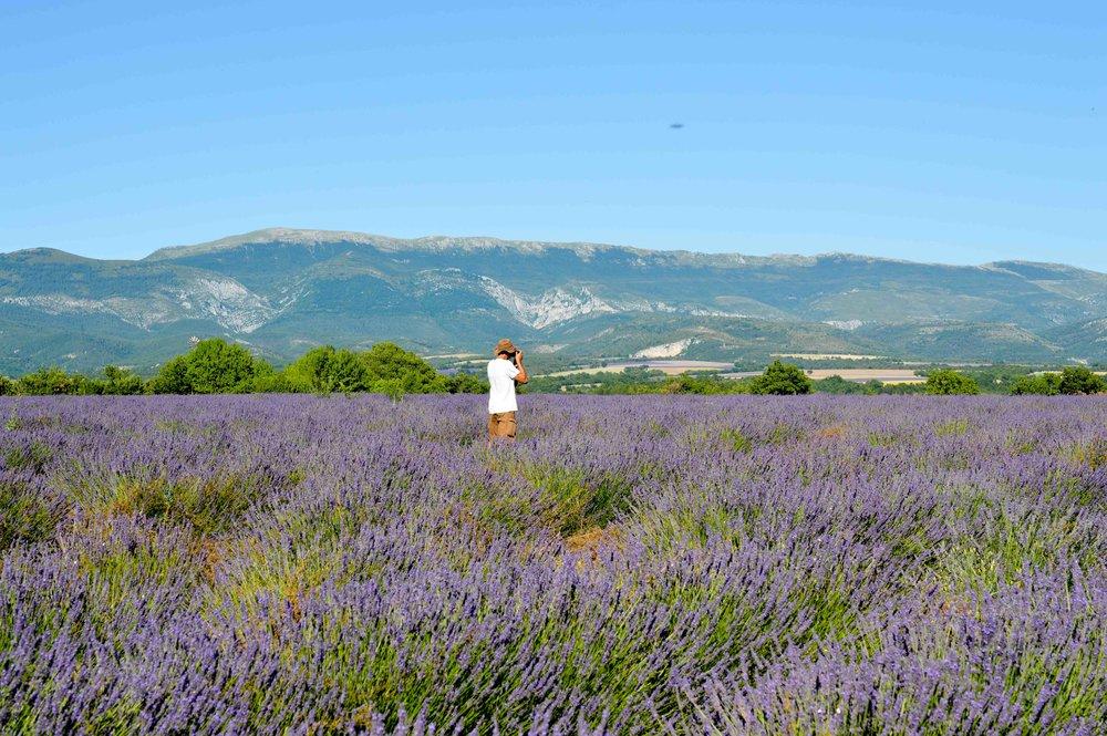 Lavender fields Fouad.jpg
