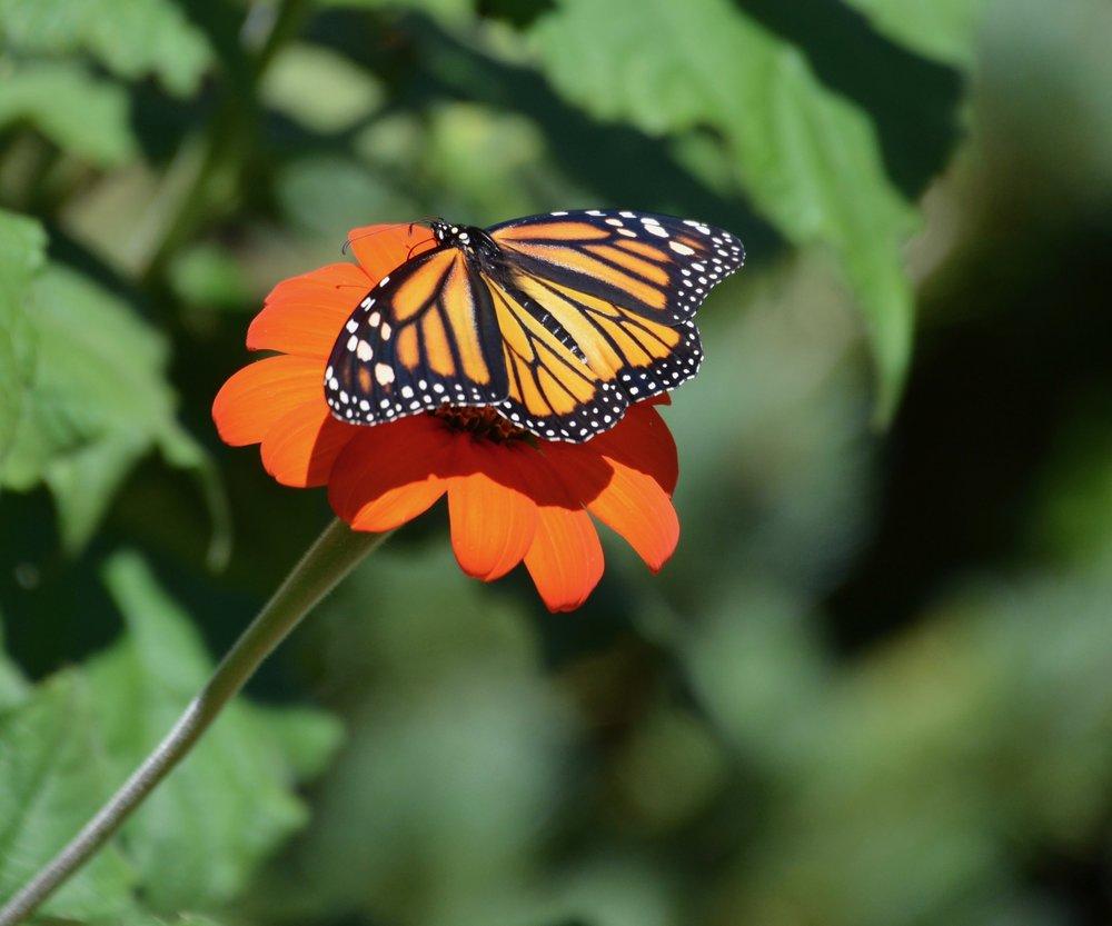 Photo credit: Kathy Diemer ~  A Garden for All