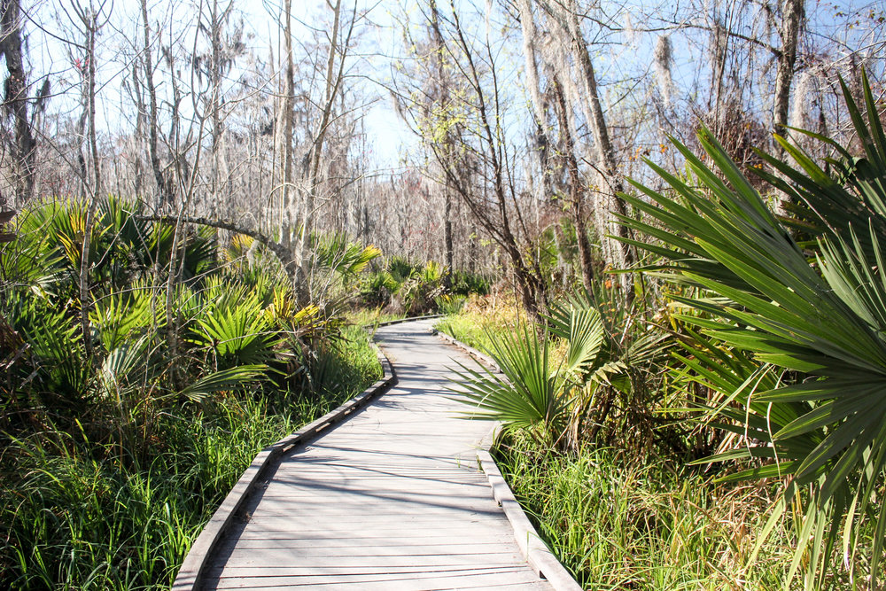 travel blog new orleans swamp a place and all its creatures