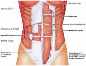 transverse-abdominis