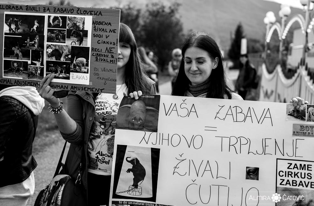 Almira Catovic Cirkus 2 (15).jpg