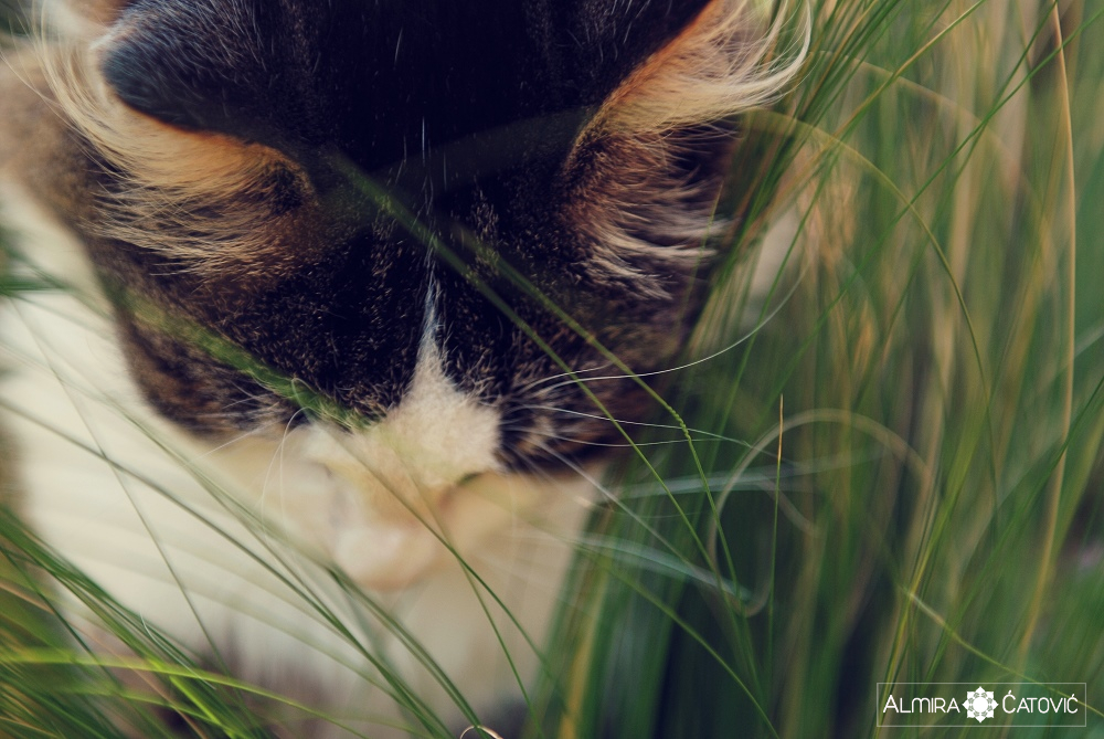 Almira-Catovic-Cats (1).jpg