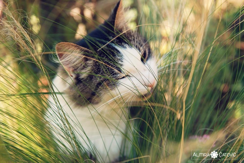 Almira-Catovic-Cats (3).jpg