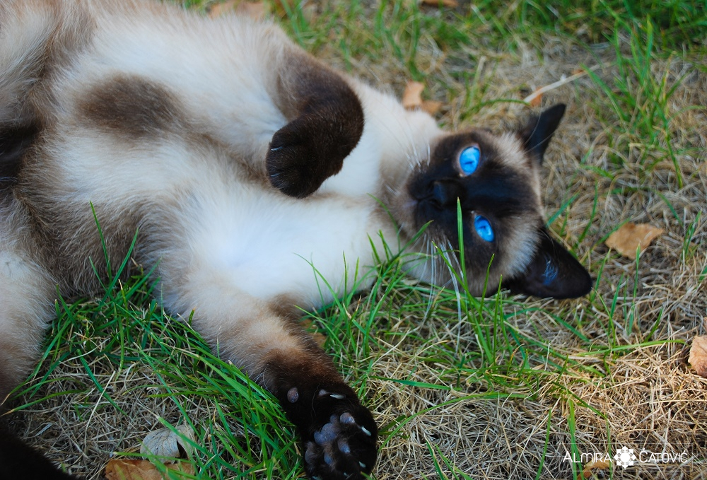 Almira-Catovic-Cats (6).jpg