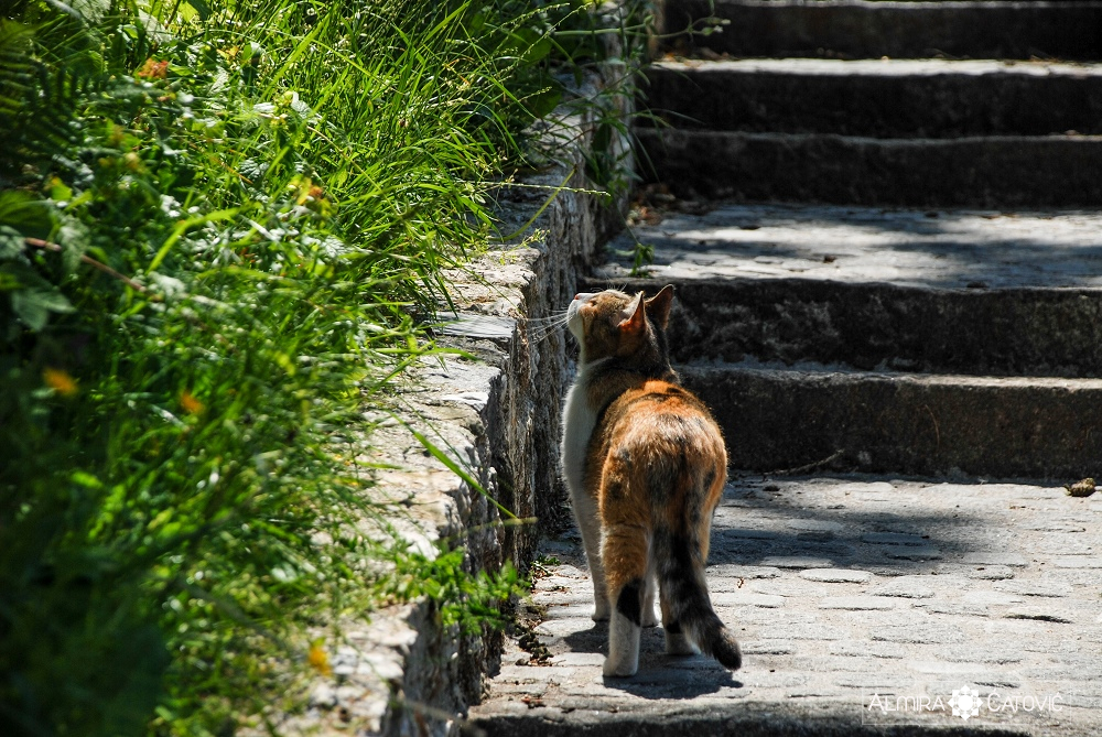Almira-Catovic-Cats (8).jpg