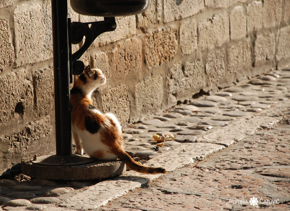 Almira-Catovic-Cats (11).jpg
