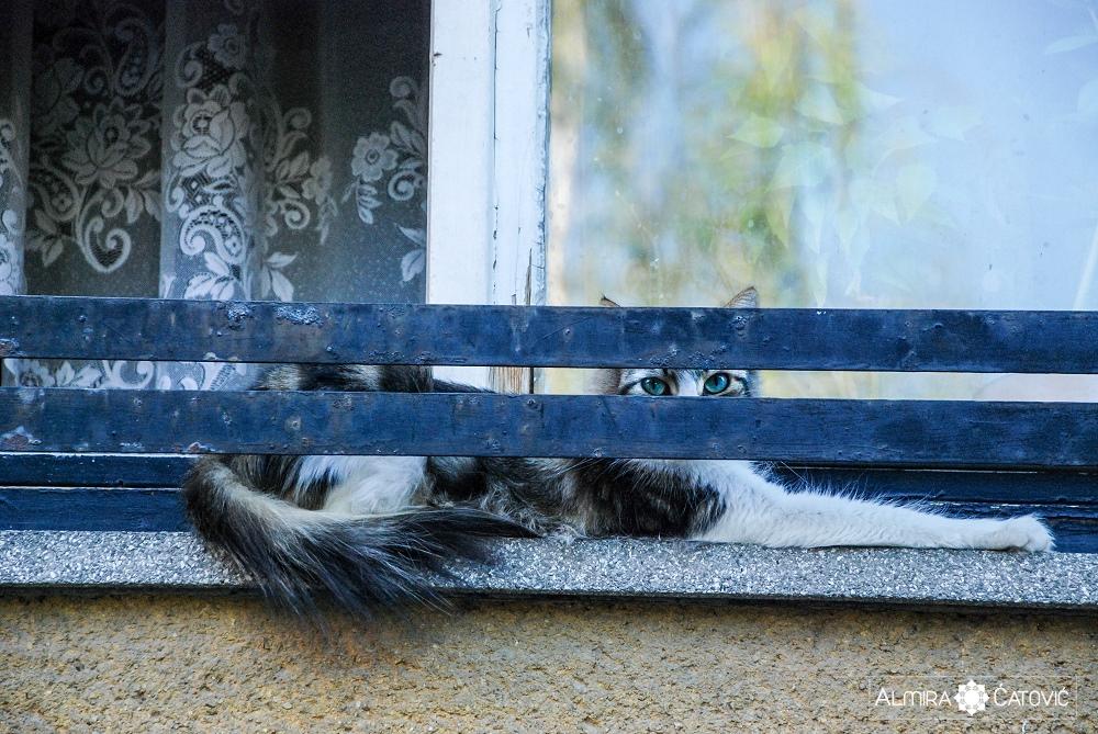 Almira-Catovic-Cats (14).jpg