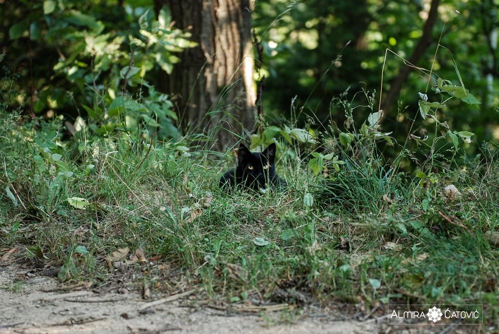 Almira-Catovic-Cats (15).jpg