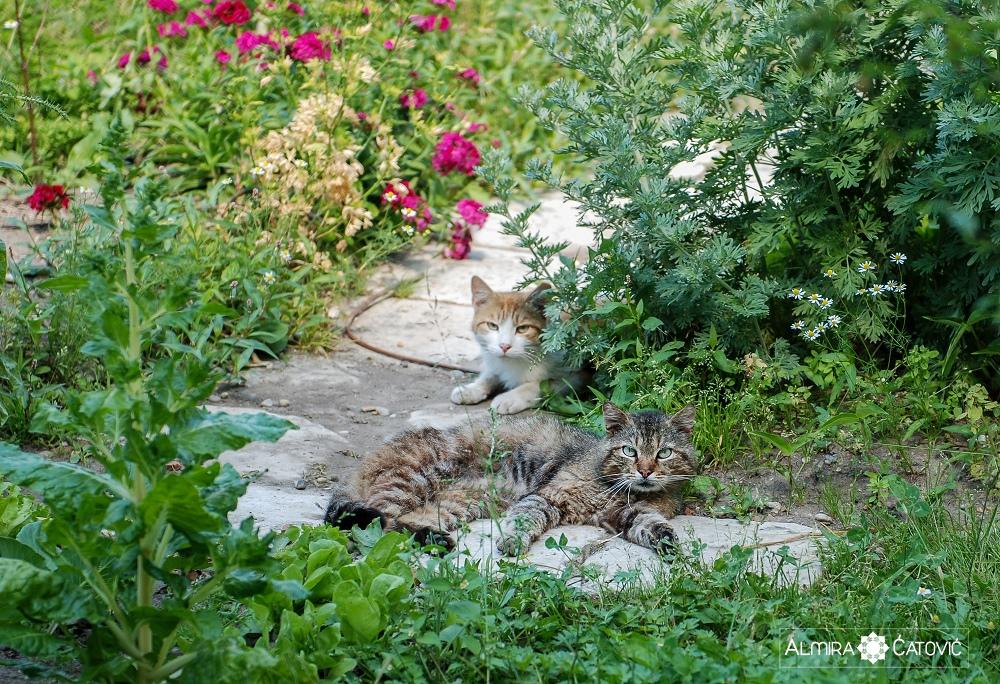 Almira-Catovic-Cats (16).jpg