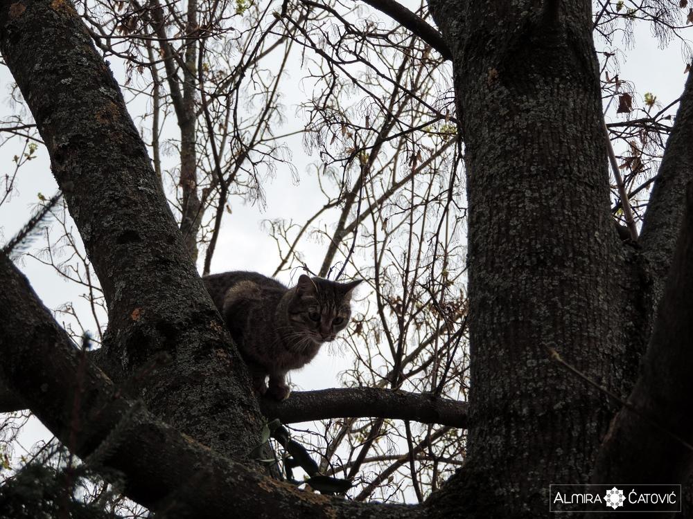 Almira-Catovic-Cats (21).jpg