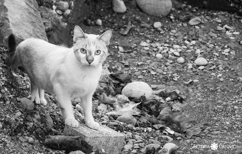 Almira-Catovic-Cats (23).jpg