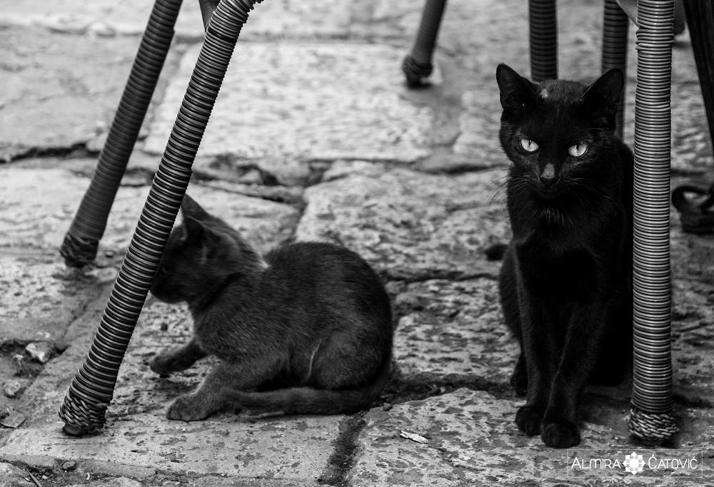 Almira-Catovic-Cats (24).jpg