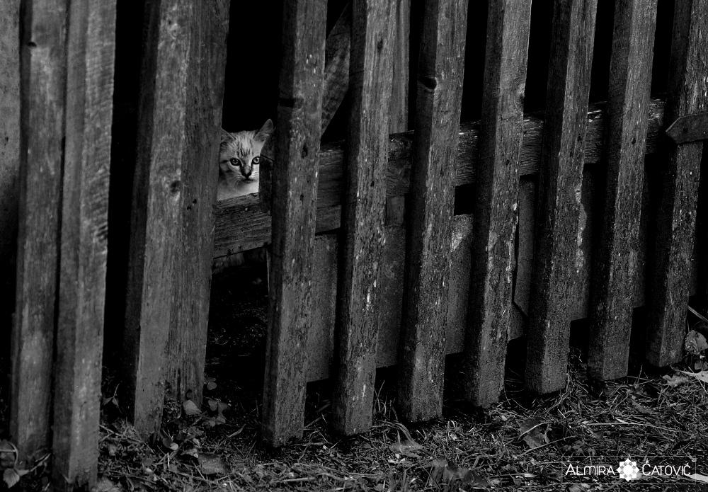 Almira-Catovic-Cats (26).jpg