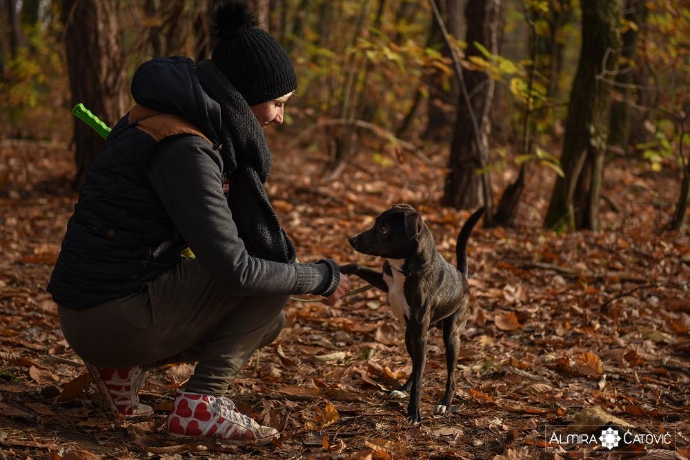 Almira Catovic Dog (2).jpg