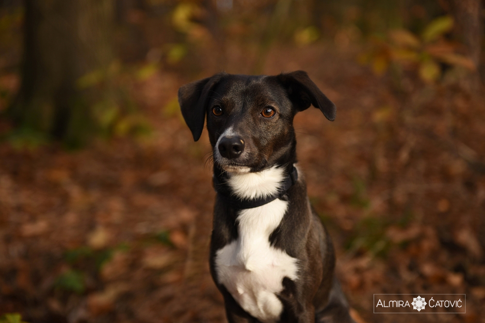 Almira Catovic Dog (9).jpg