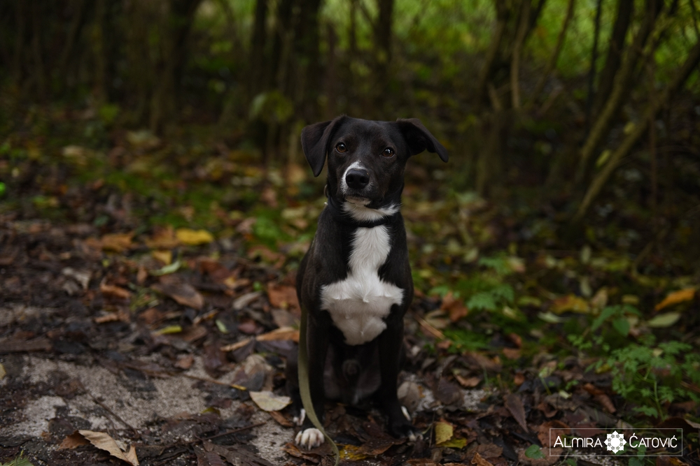 Almira Catovic Dog (10).jpg