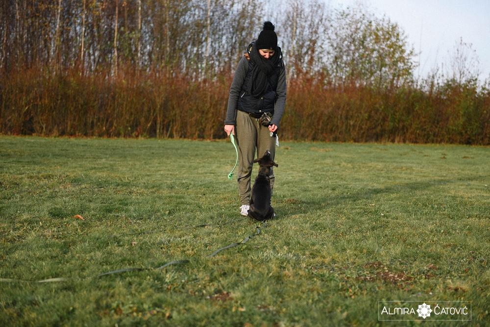 Almira Catovic Dog (13).jpg