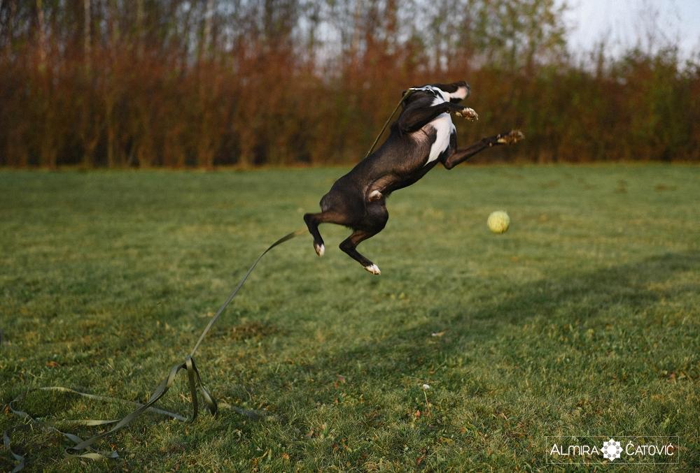 Almira Catovic Dog (18).jpg