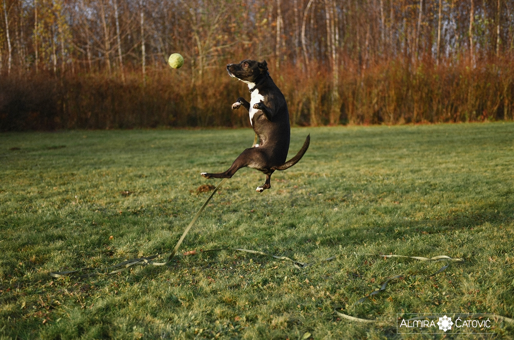 Almira Catovic Dog (19).jpg