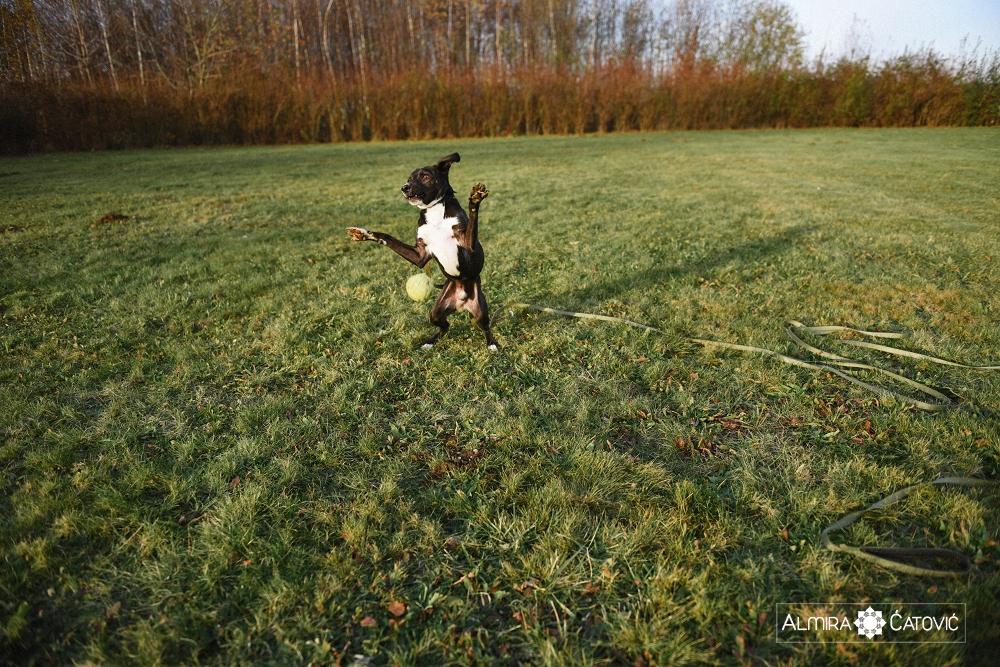 Almira Catovic Dog (20).jpg