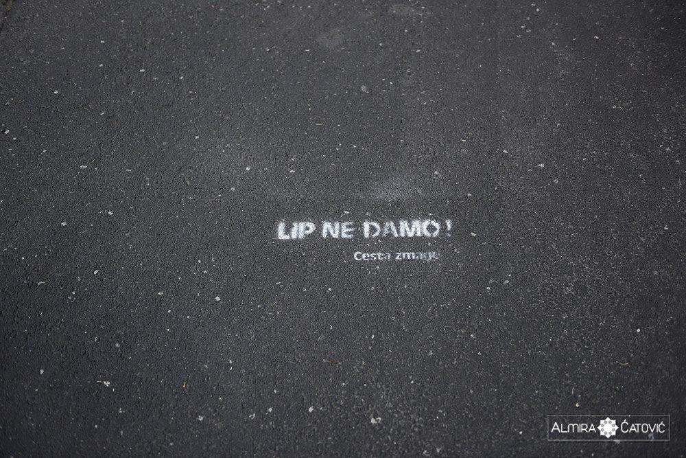 AlmiraCatovic_Lipe (1).jpg