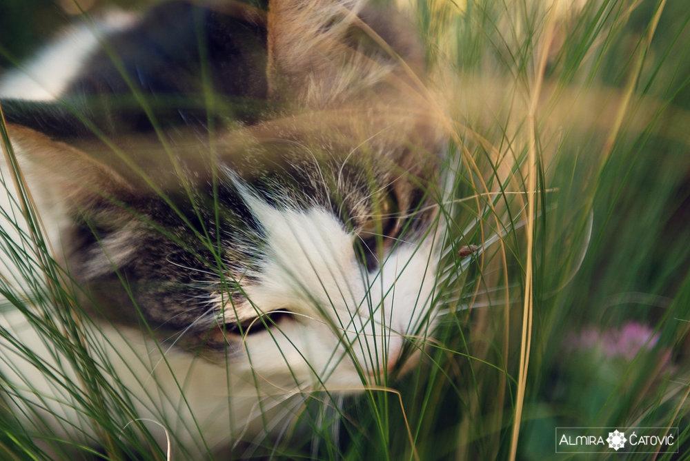Mačke (2).jpg