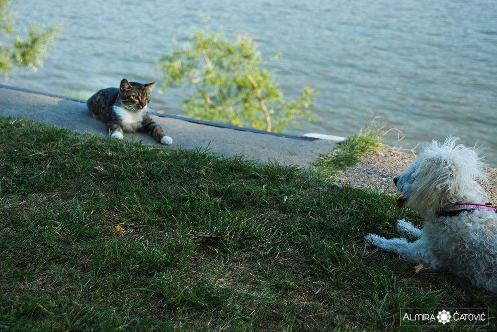 Mačke (4).jpg